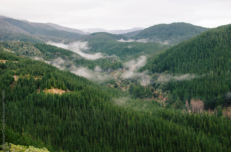 Fog over mountains and forest by Dominique Chapman for Stocksy United
