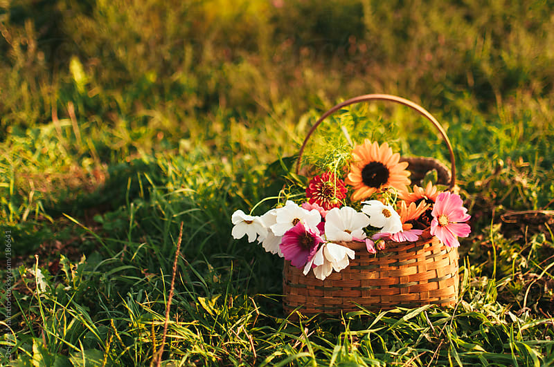 basket of fresh picked flowers in the grass by Deirdre Malfatto for Stocksy United