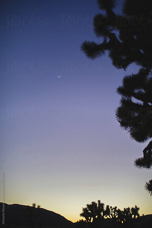 Moonrise over Joshua Tree by Michelle Moore for Stocksy United