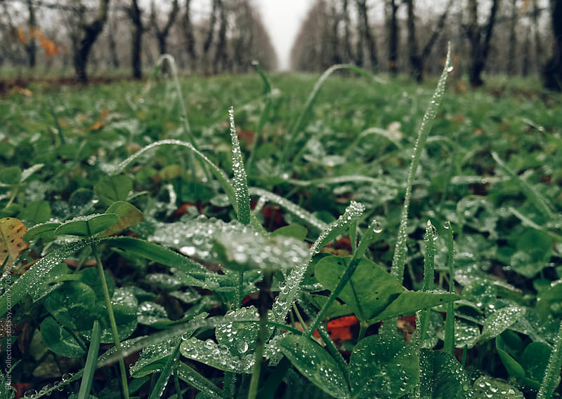 Fresh green grass and weeds in the morning with dewdrops by Blue Collectors for Stocksy United
