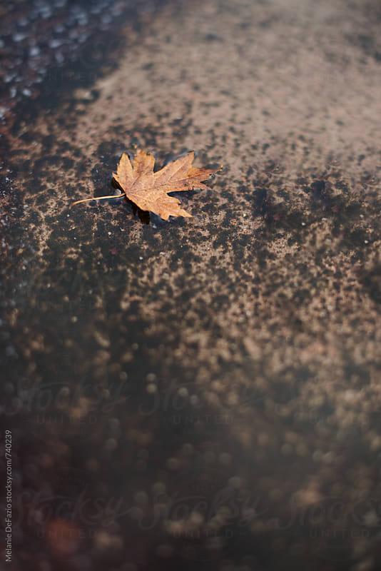 leaf by Melanie DeFazio for Stocksy United