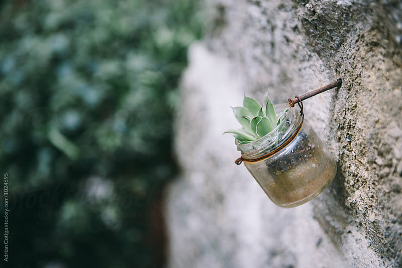 Small succulent plant in a jar on a wall by Adrian Cotiga for Stocksy United