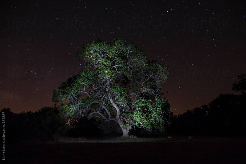 An oak tree lit in a field at night by Lior + Lone for Stocksy United