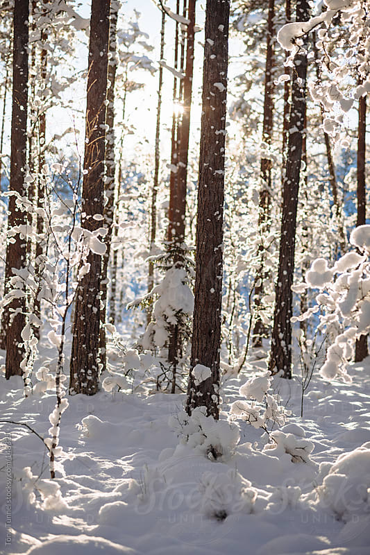 Snow covered forest in Estonia by Tõnu Tunnel for Stocksy United