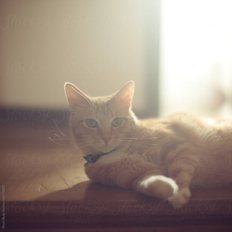 Backlit Cat by Kevin Russ for Stocksy United