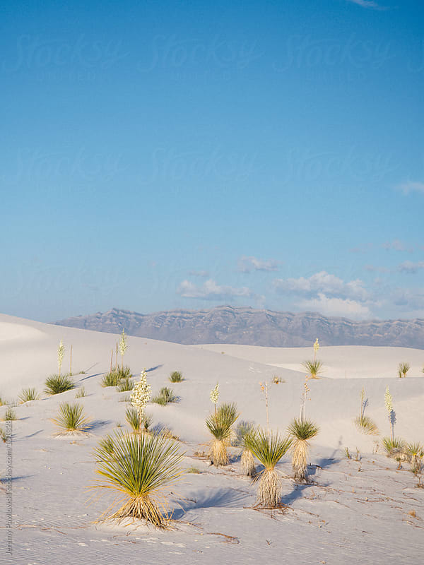 Plants in white sand dunes with mountains in background by Jeremy Pawlowski for Stocksy United