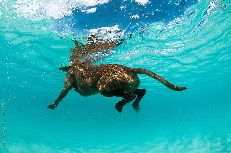 Underwater Dog by Caine Delacy for Stocksy United