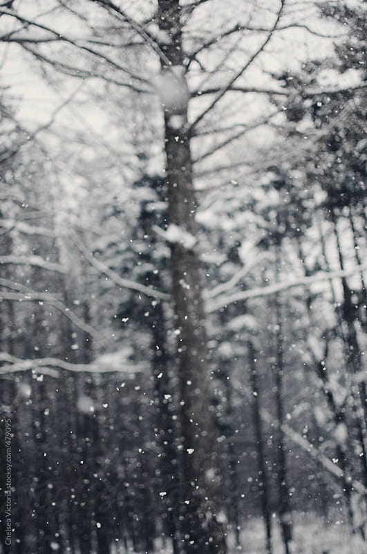 Snow falling in the forest by Chelsea Victoria for Stocksy United