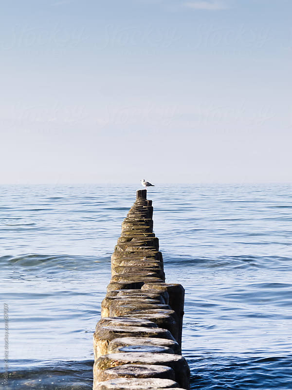 Wooden wavebreakers leading into the sea, seagul sitting at the end by Melanie Kintz for Stocksy United