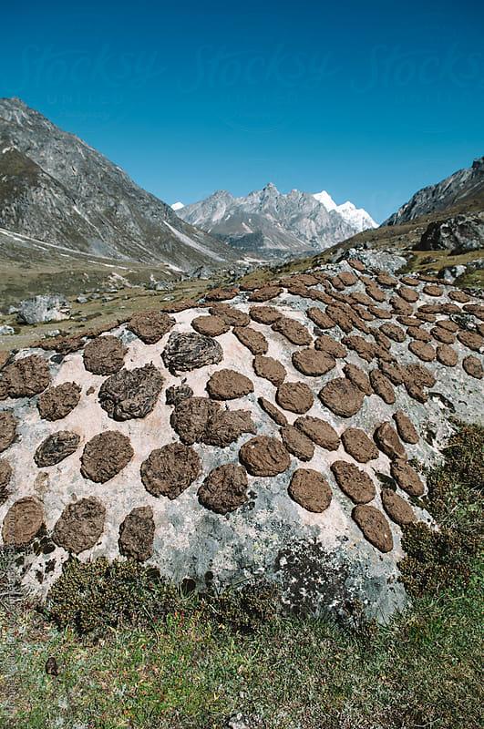 Drying Yak dung, Everest Region, Sagarmatha National Park, Nepal. by Thomas Pickard for Stocksy United