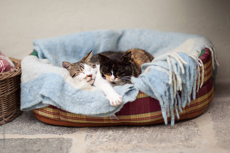 Two cats sleep close one to the other in kennel by Laura Stolfi for Stocksy United