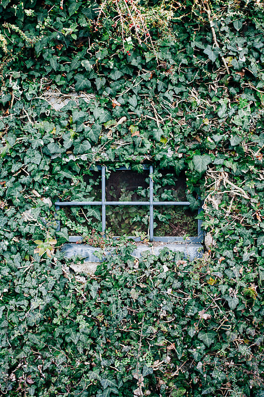 Little window hidden behind ivy by Giada Canu for Stocksy United