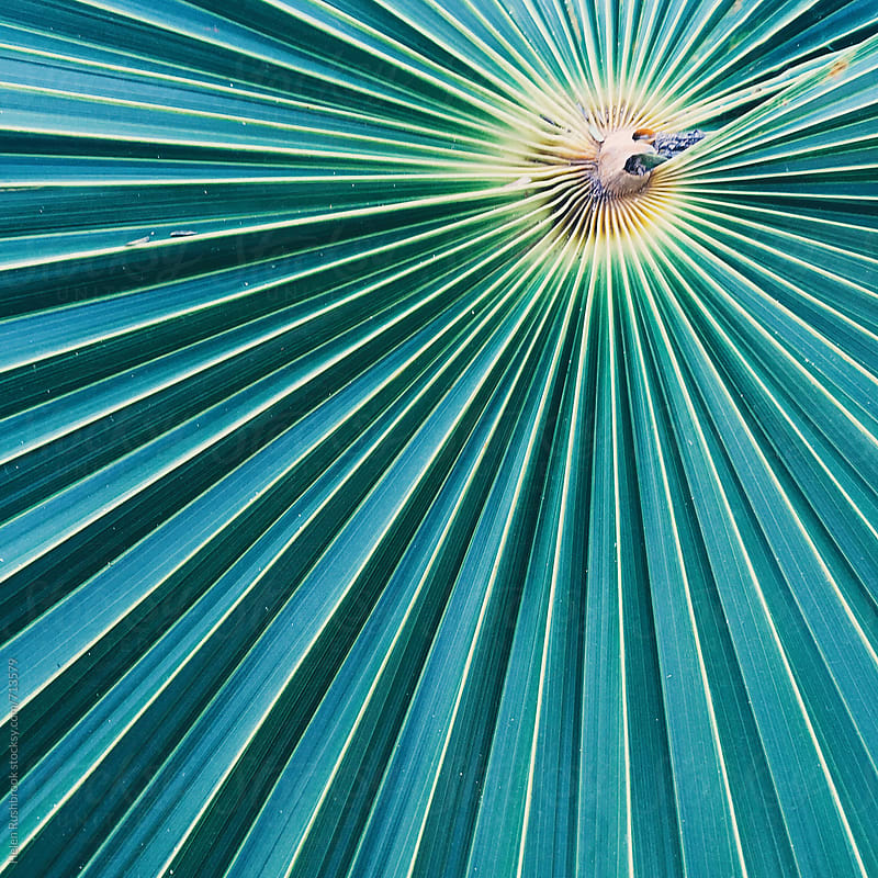 Detail of a palm leaf by Helen Rushbrook for Stocksy United