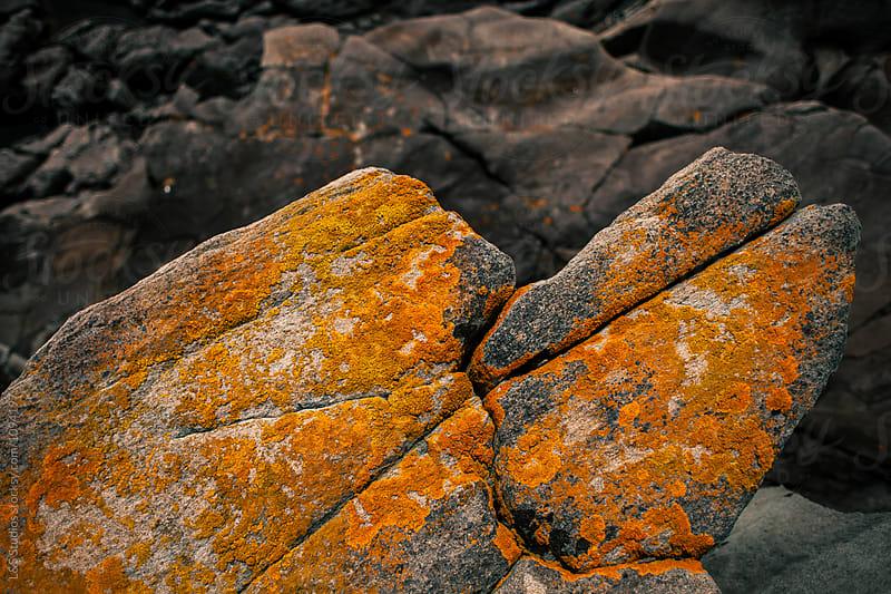 Orange moss by L&S Studios for Stocksy United