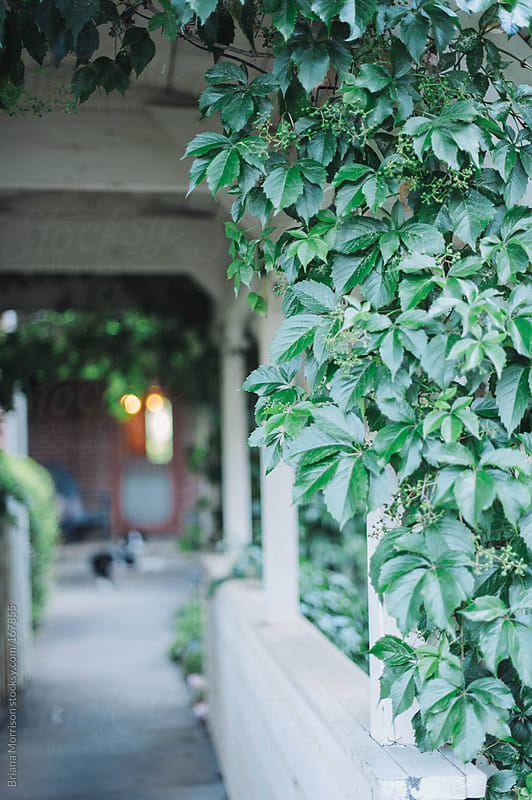 Green Vines on an Arbor by Briana Morrison for Stocksy United
