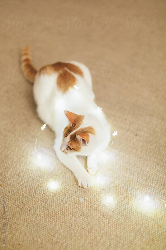 Ginger cat having fun with lights twine by Laura Stolfi for Stocksy United