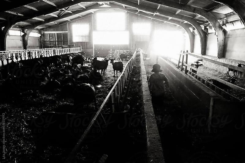 Little boy walking in a barn with goats by Léa Jones for Stocksy United