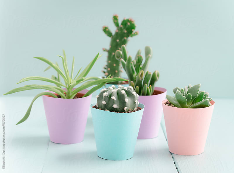 Mini succulents in pastel-coloured handmade paper flower pots by Elisabeth Coelfen for Stocksy United