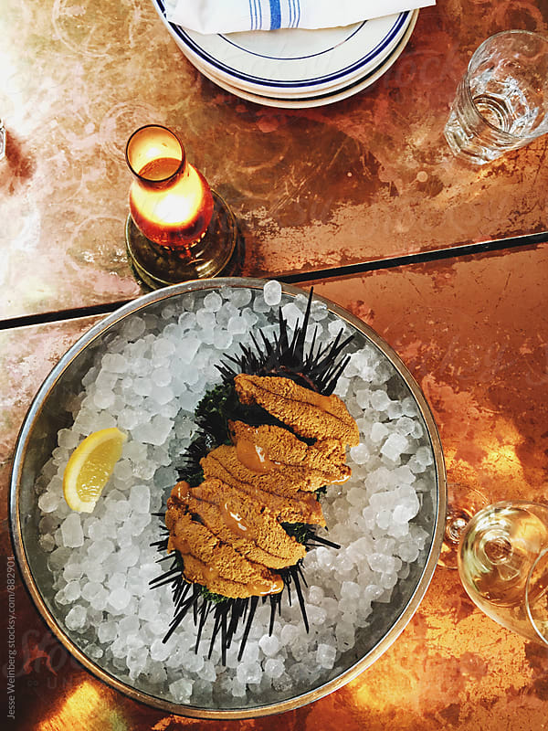 Uni (Sea Urchin) by Jesse Weinberg for Stocksy United