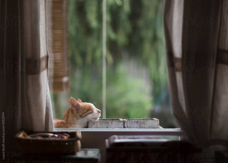Ginger cat sleeps leaning against flower pots on windowsill by Laura Stolfi for Stocksy United