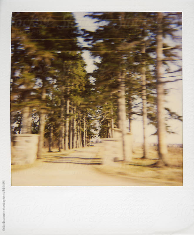 A row of trees lines a country driveway by Erik Naumann for Stocksy United