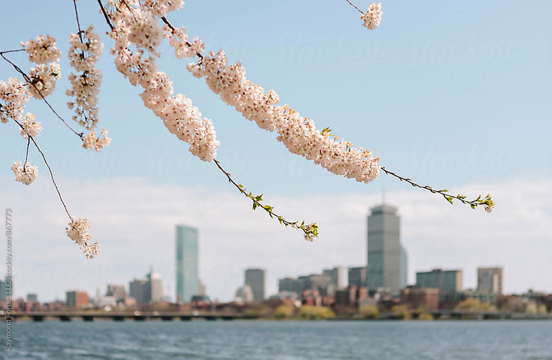 Spring Arrives in Boston by Raymond Forbes LLC for Stocksy United