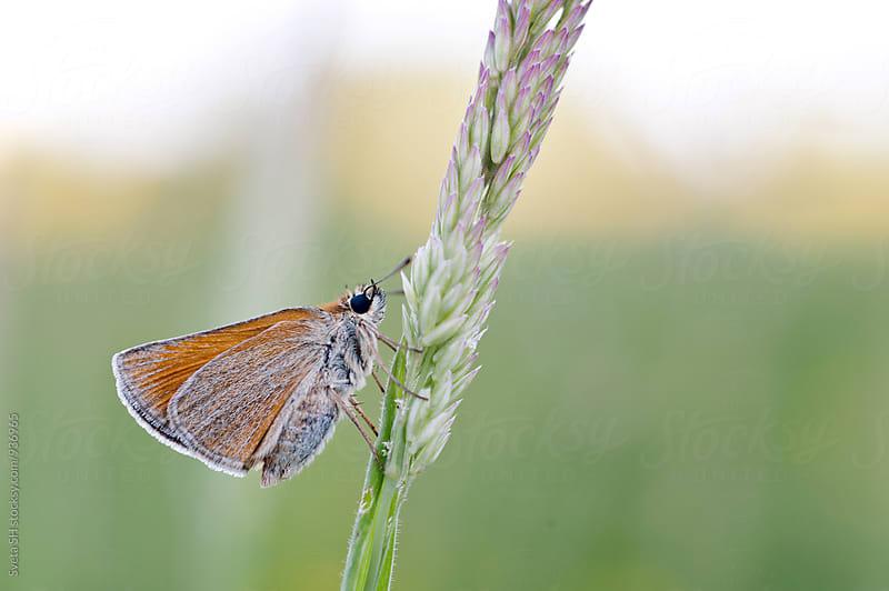 Butterfly by Sveta SH for Stocksy United