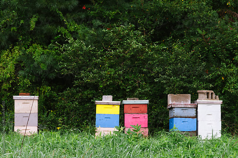 colorfully painted wooden beehives by Deirdre Malfatto for Stocksy United
