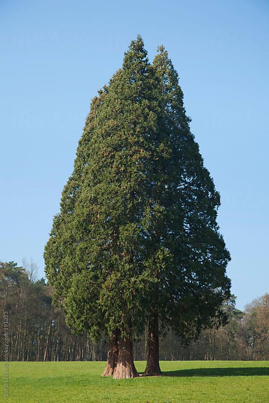 tree by Sonja Lekovic for Stocksy United