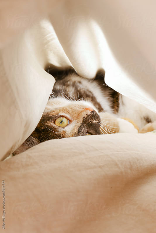 Lovely domestic pet cat lying on bed and looking up by Alberto Bogo for Stocksy United