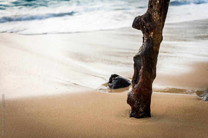 Tree trunk on peaceful sandy beach by Trent Lanz for Stocksy United