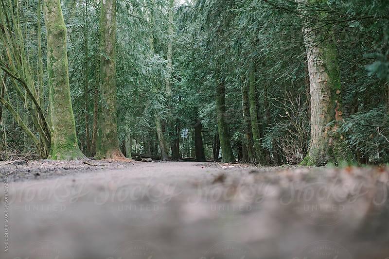 Empty path in a forest by Ivo de Bruijn for Stocksy United