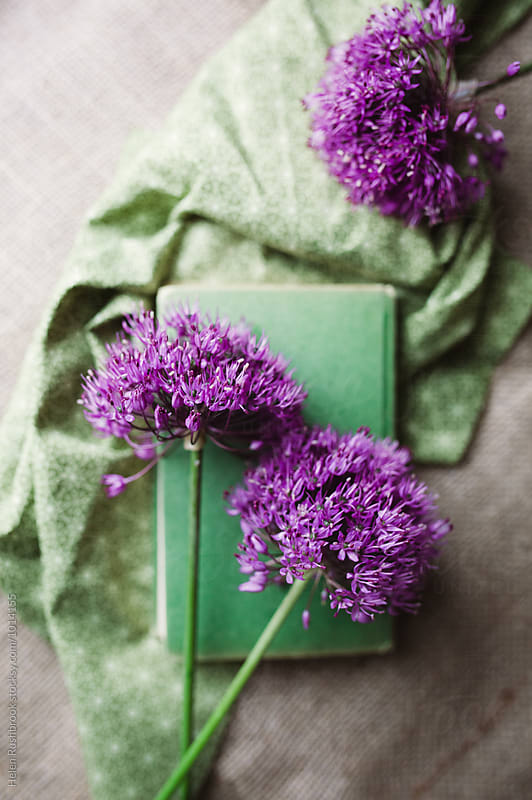 Purple Allium flowers by Helen Rushbrook for Stocksy United