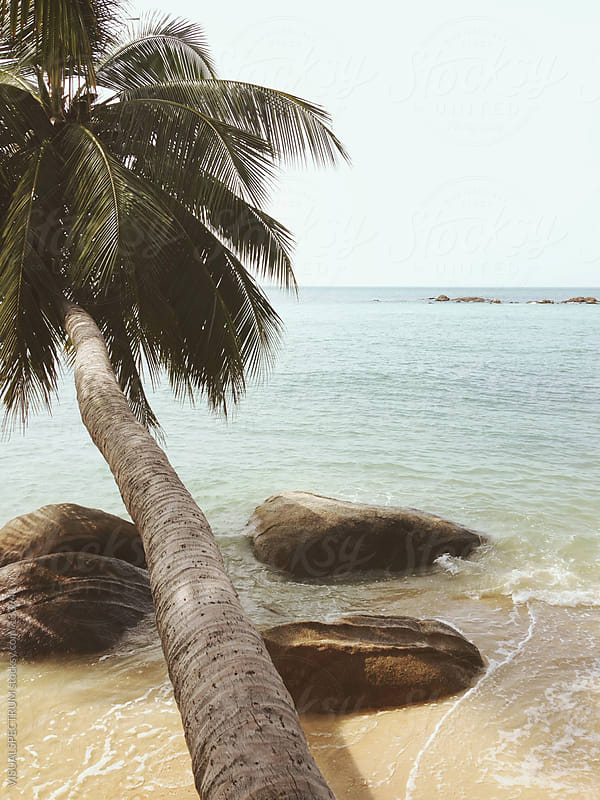 Palm Tree on Beach by VISUALSPECTRUM for Stocksy United
