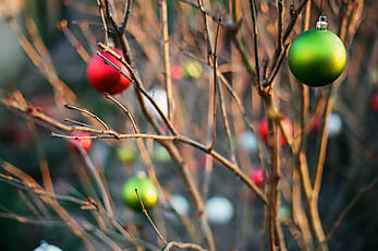 red white and green christmas ornaments hang on a barren bush in a city garden - Red White Green Christmas Decor