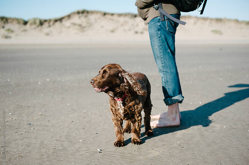 Dog looks down the beach with a man standing behind it by Suzi Marshall for Stocksy United