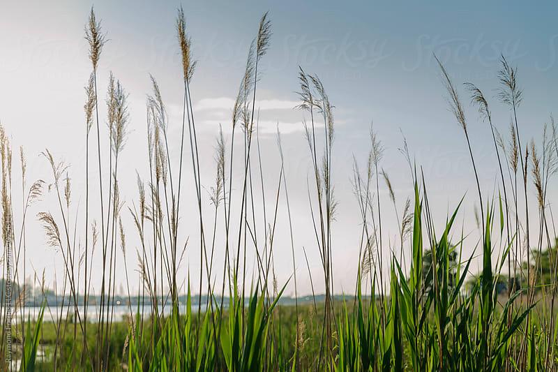 Edge of Chesapeake Bay by Raymond Forbes LLC for Stocksy United