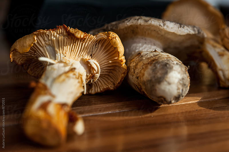 chanterelle Mushrooms by Aubrie LeGault for Stocksy United