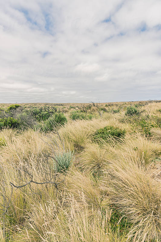 Dry Arid Bushland Field in Southern Australia by suzanne clements for Stocksy United