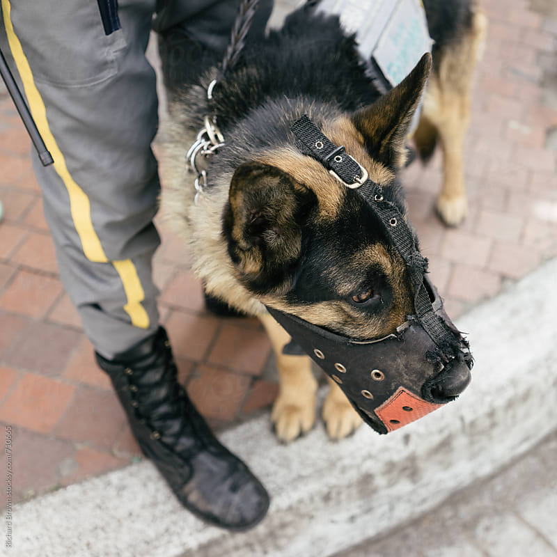Police Dogs  by Richard Brown for Stocksy United