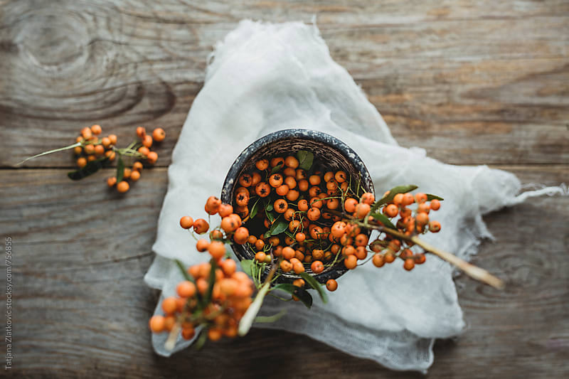 Orange pyracantha berries by Tatjana Ristanic for Stocksy United