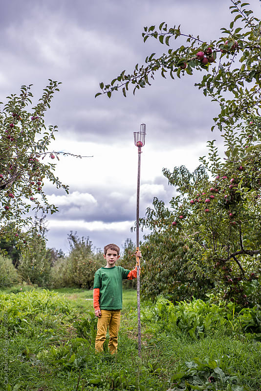 Boy stands in an apple orchard in autumn holding a fruit picker in his hand by Cara Dolan for Stocksy United