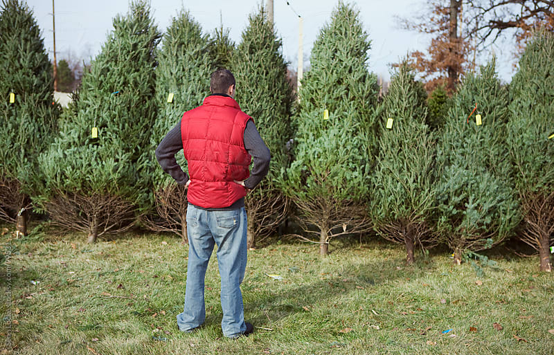 Tree Lot: Man Trying To Choose Christmas Tree by Sean Locke for Stocksy United