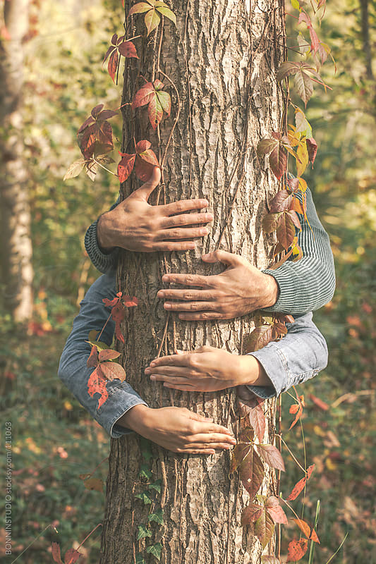 Hands of love couple embracing a tree. Colorful autumnal leaves. by BONNINSTUDIO for Stocksy United