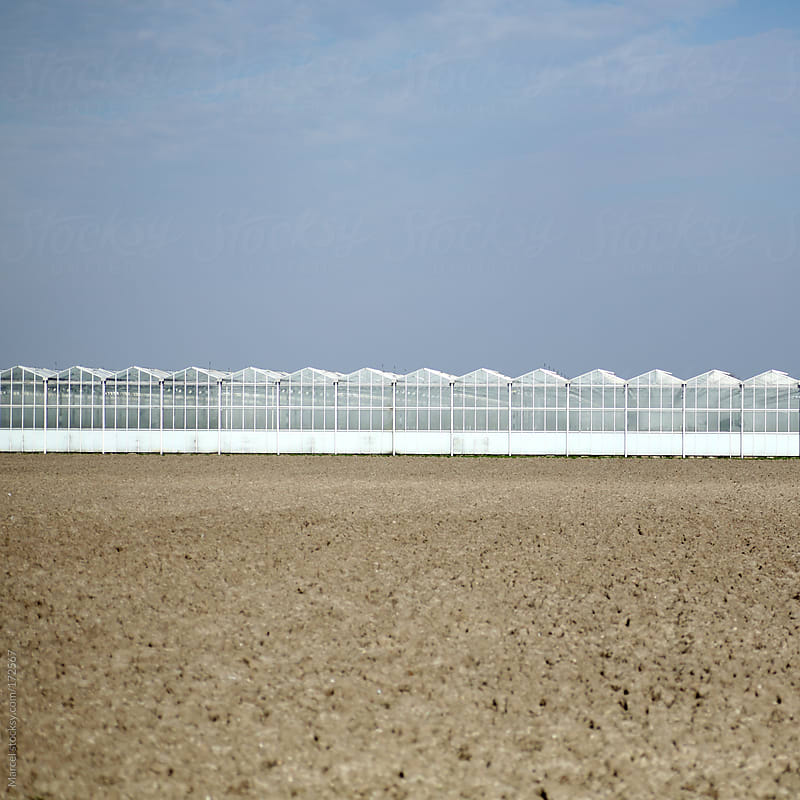 Greenhouses by Marcel for Stocksy United