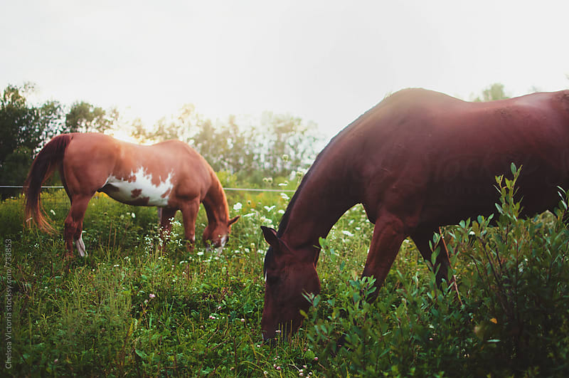 Horses at sunset by Chelsea Victoria for Stocksy United