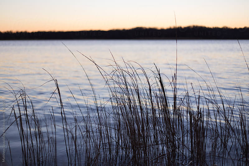 Reeds and grass in Chesapeake Bay water by Matthew Spaulding for Stocksy United