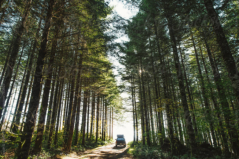 Truck driving through tall forest trees by Isaiah & Taylor Photography for Stocksy United