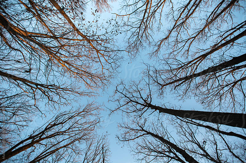 Above view of trees in winter by Matthew Spaulding for Stocksy United