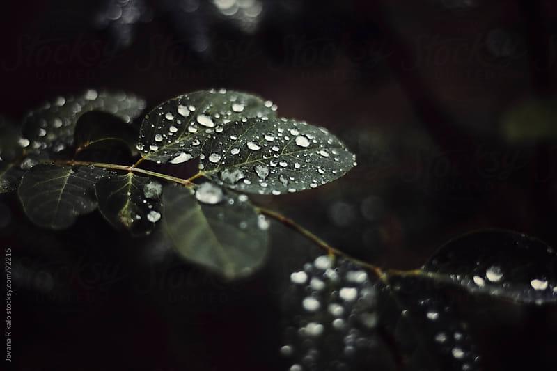 Raindrops on leaves by Jovana Rikalo for Stocksy United